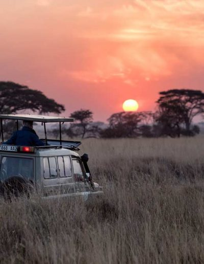A safari drive at sunset in Kruger park, South Africa