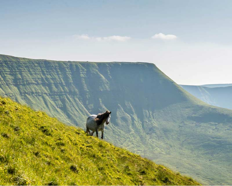 A horse at the Brecon Beacons