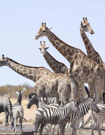 Etosha in Namibia — © Diamond Travel