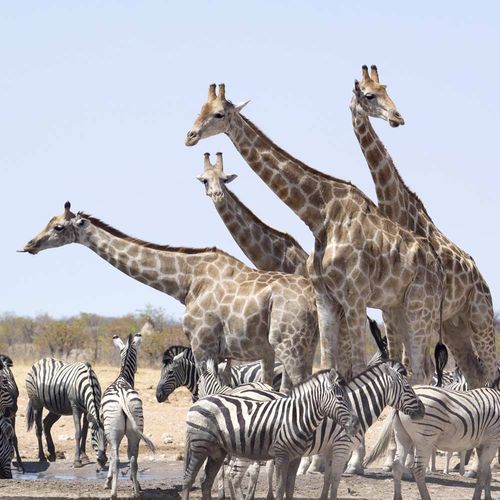 Etosha in Namibia — © Diamond Travel