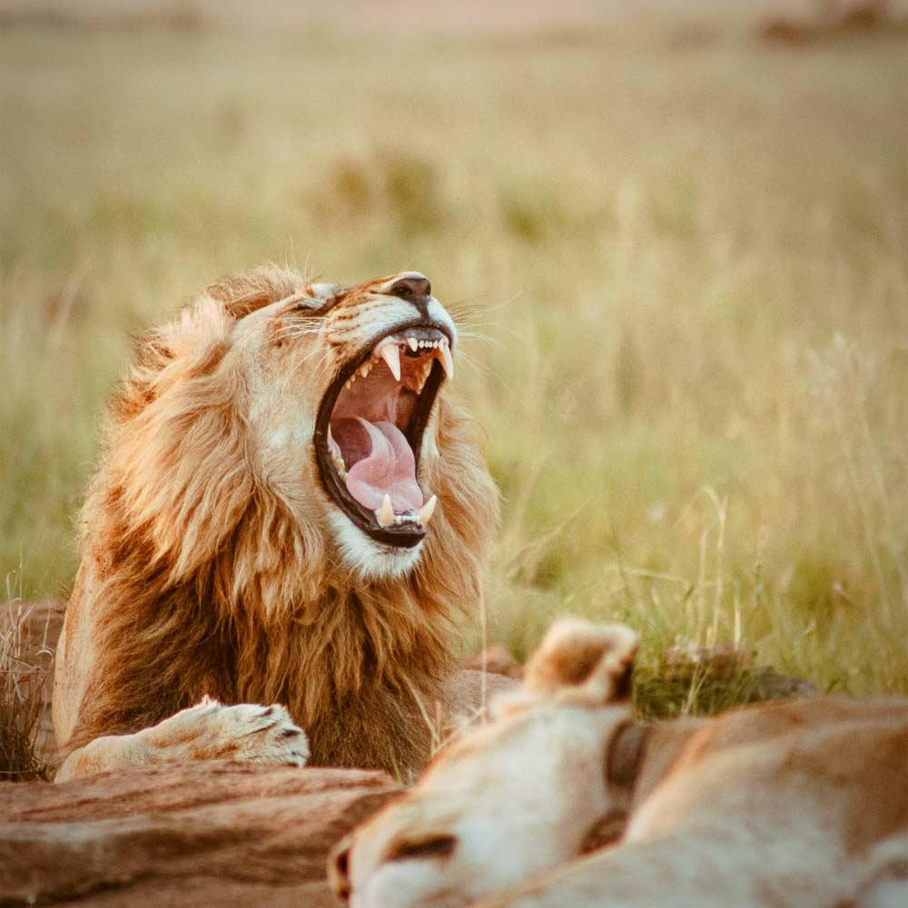 Kruger National Park — © Diamond Travel