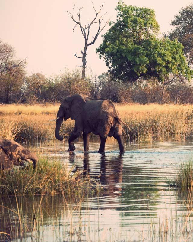 Chobe National Park — © Diamond Travel