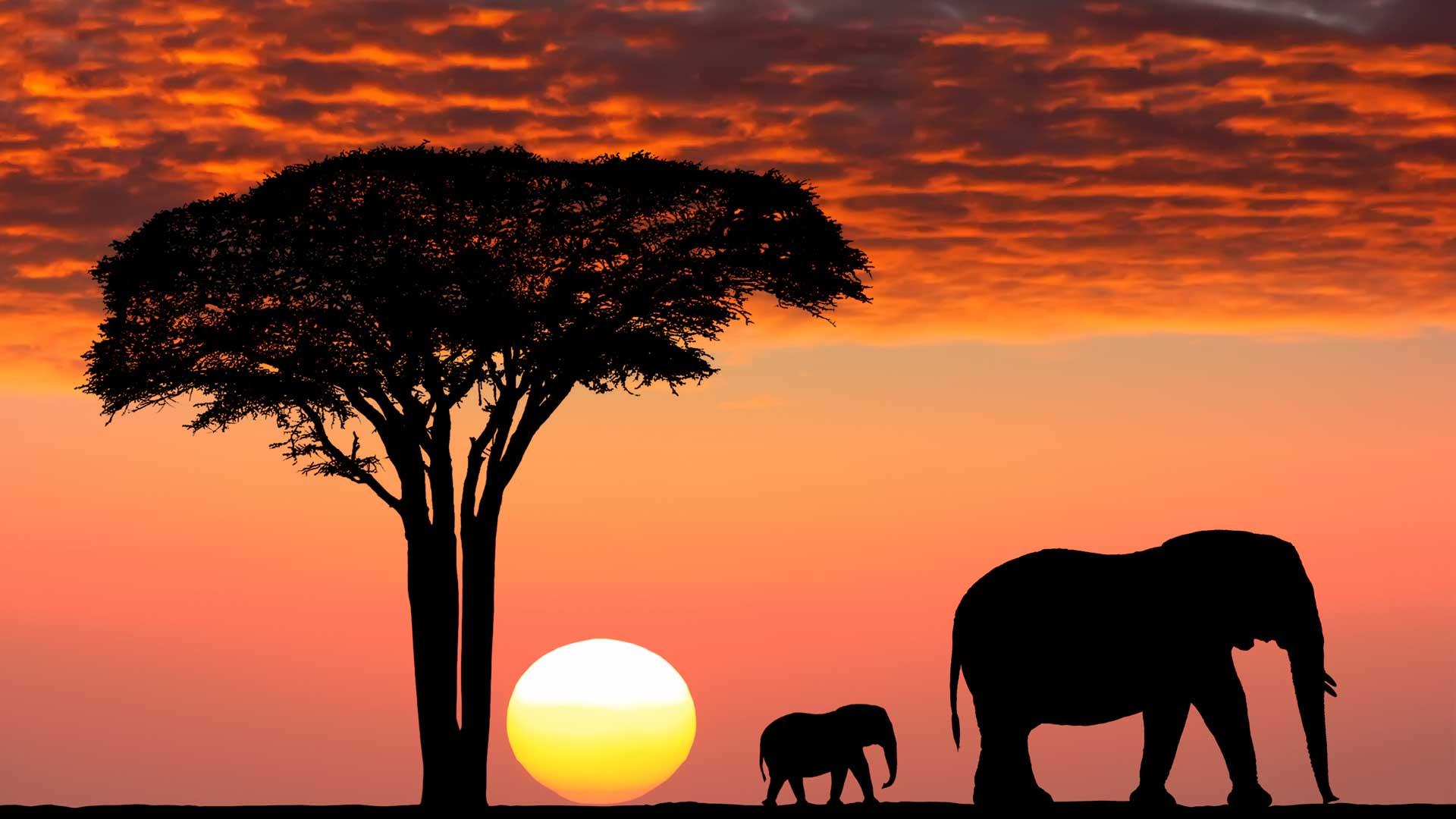 Éléphants au coucher du soleil au Kenya