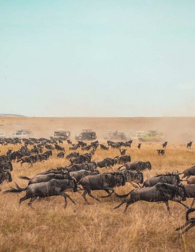 Green-inspirations-tanzania-2-wildbeast-migration