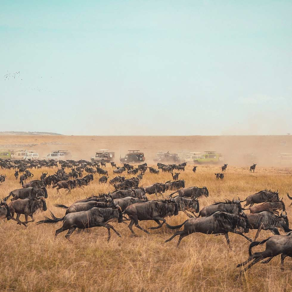 Wildebeest migration on the Serengeti