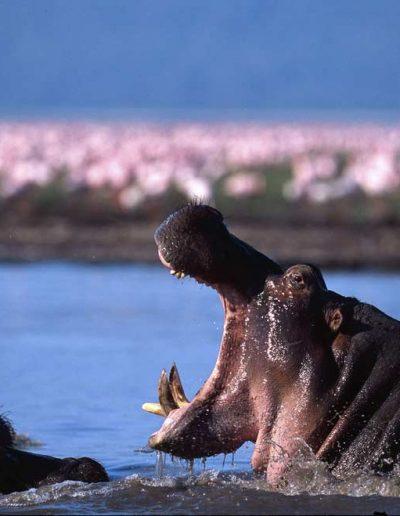 Green-inspirations-tanzania-slide-1-lake-manyara