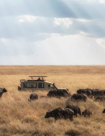 Safari truck on the Serengeti