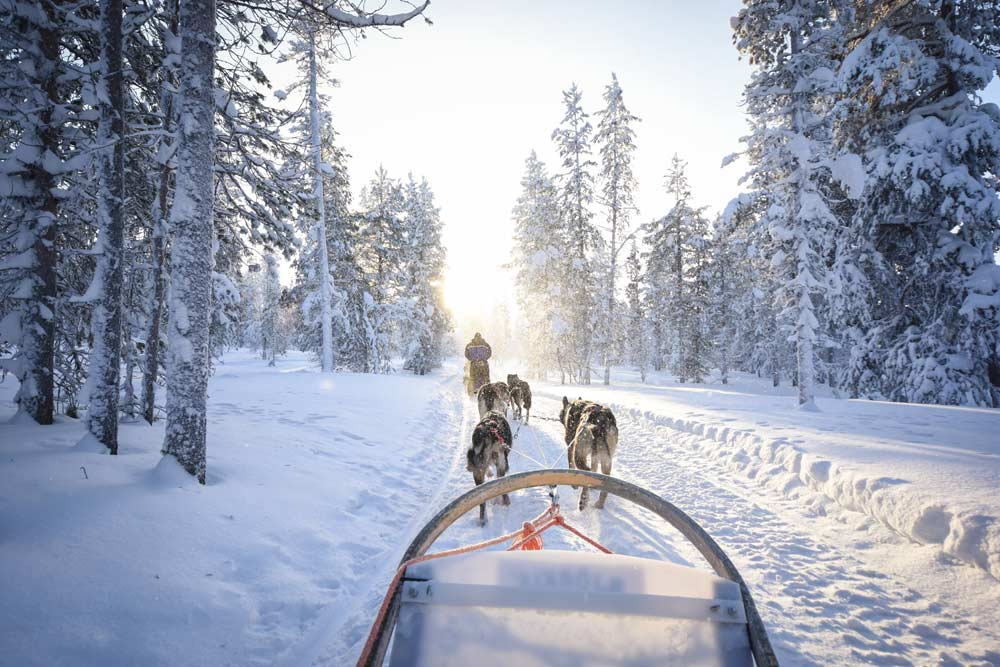 Sledding with dogs in Lapland