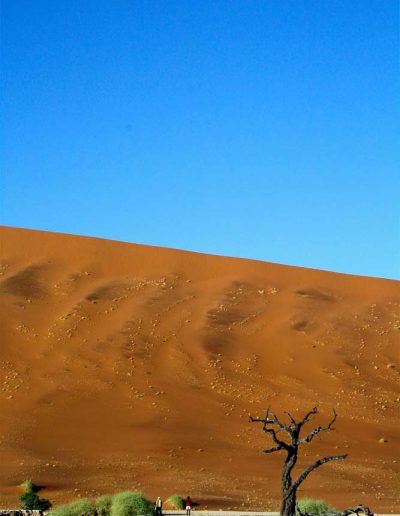 Sossusvlei Sand Dunes with a dead tree, Namibia
