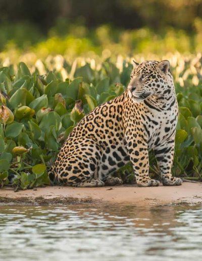 Quetzal Motivo - Belize slide Wildlife