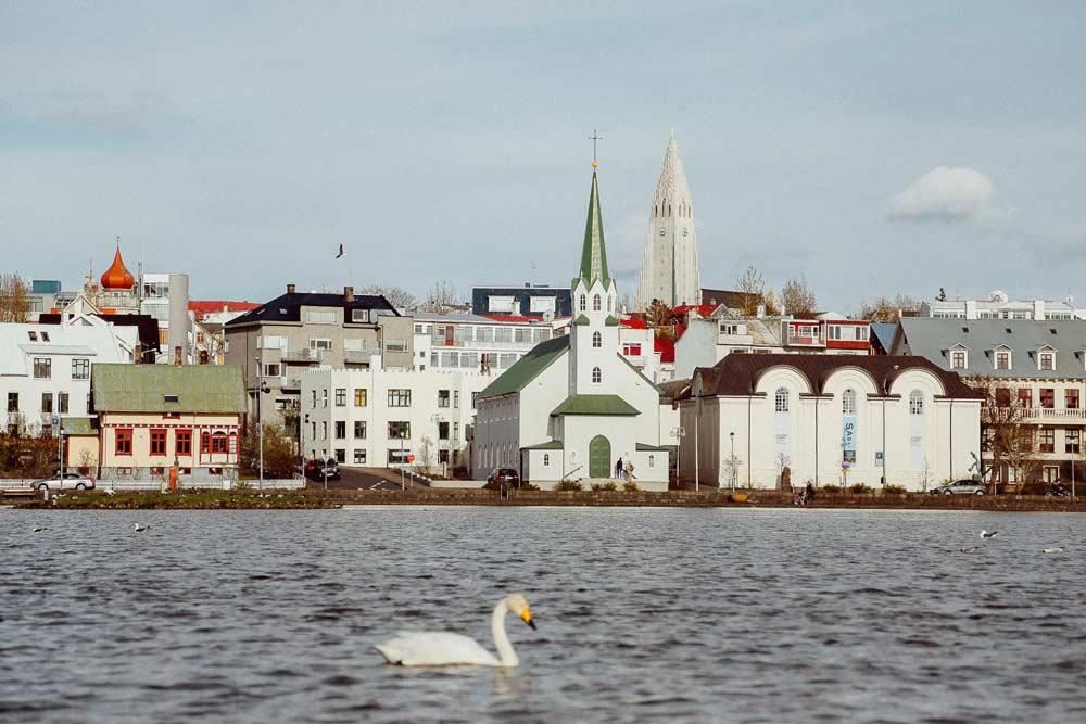 Swan in the water in Reykjavík, Iceland