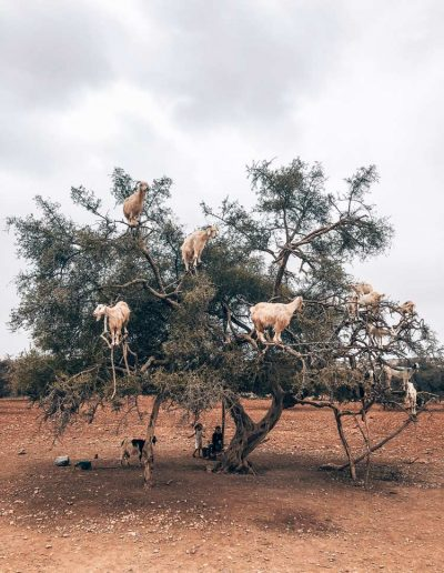 Marrakech-famtrip-06